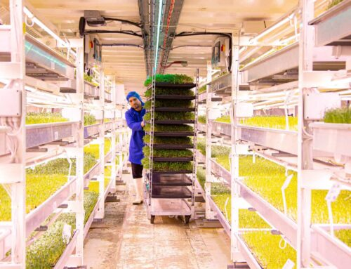 The Future of Vegetables and Fruit